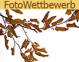 fotowettbewerb-blaetter-fotografie-tipp-www-lightfischer-de